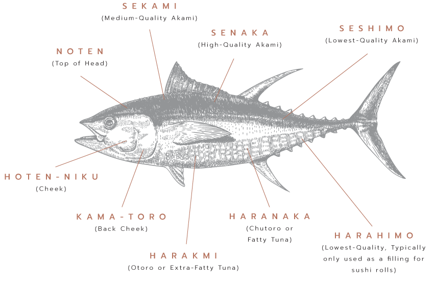 Diagram of a Fish